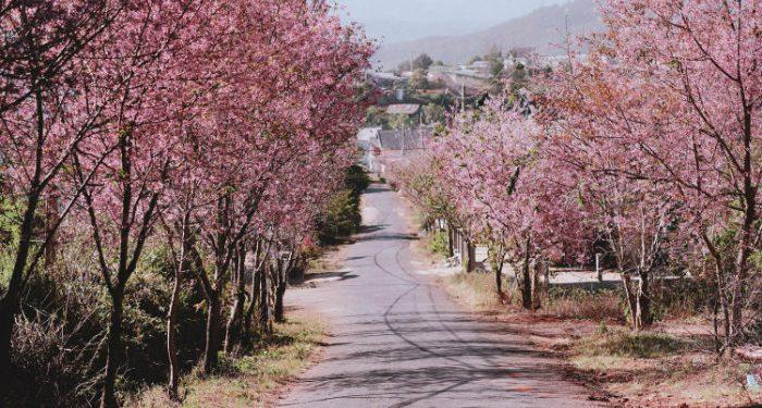 Ngắm cảnh đường hoa Đà Lạt buổi sáng