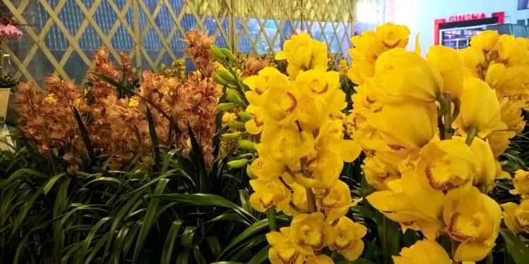 Hoa địa lan Đà Lạt từ lâu đã nổi tiếng khắp nơi bởi vẻ đẹp cao sang, quý phái
