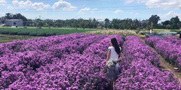 Cánh đồng hoa Lanvender Đà Lạt là địa điểm lý tưởng để các du khách thăm quan và chụp ảnh
